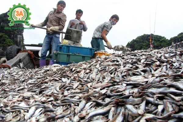 Máy thái cá 2 đầu cắt 3A4Kw giúp tận dụng cá thải triệt để