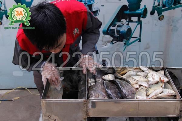 Khay chứa nguyên liệu của Máy thái cá 2 đầu cắt 3A4Kw