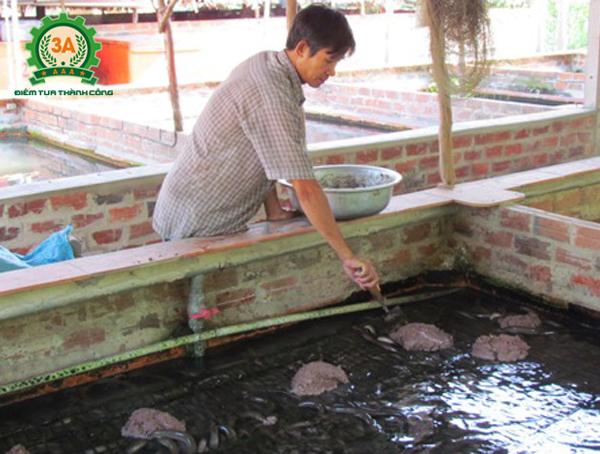 Thức ăn nuôi lươn không bùn cần phải được chuẩn bị kỹ lưỡng