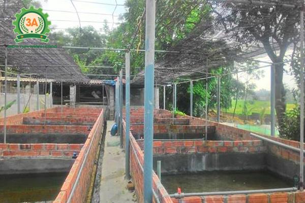 Nuôi ếch trong bể xi măng: Xây dựng bể nuôi ếch