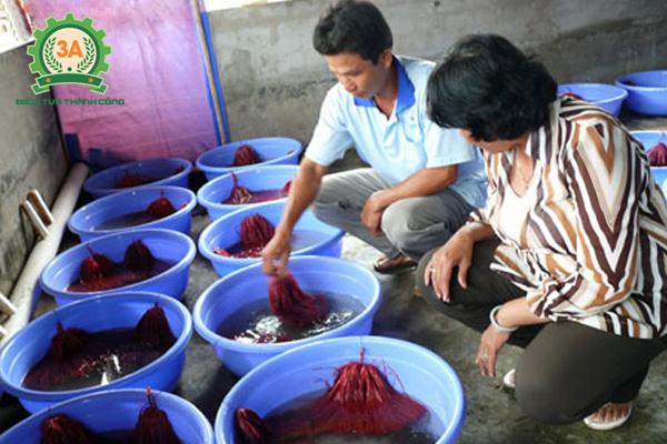 Cách thuần dưỡng lươn giống để nuôi lươn trong can nhựa
