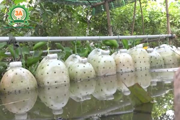 Nuôi lươn trong can nhựa: Cho lươn đã thuần dưỡng vào can và thả xuống nước