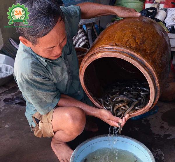 Nuôi lươn trong can nhựa: Cho lươn giống tắm thuốc kháng sinh, hóa chất, hoặc thuốc nam...