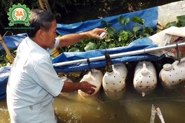 Nuôi lươn trong can nhựa: Cho lươn ăn