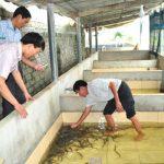 Nuôi lươn trong bể xi măng – Mô hình làm giàu mới của bà con chăn nuôi