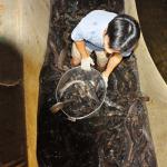 Kỹ thuật nuôi cá chình cho năng suất cao