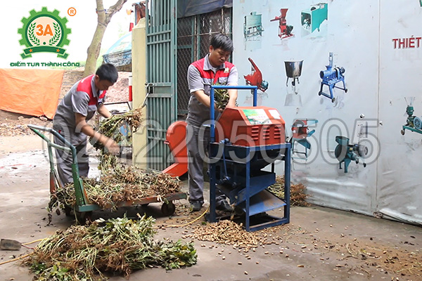 Kỹ thuật trồng lạc (08)