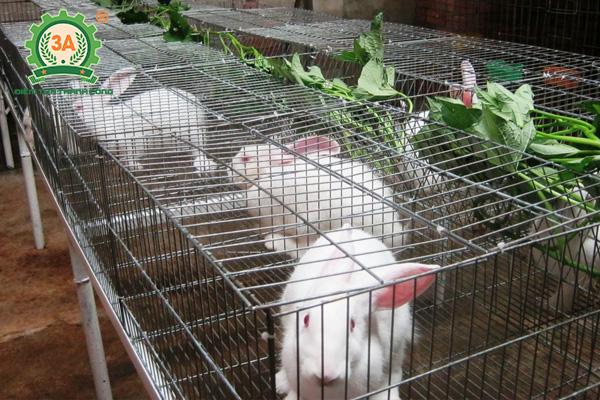 Kỹ thuật làm chuồng nuôi thỏ