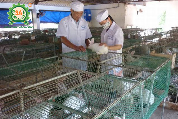 Kỹ thuật làm chuồng nuôi thỏ: Tiêm vacxin cho thỏ