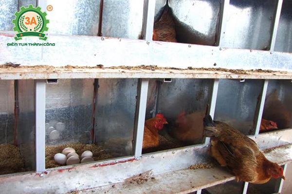 Kỹ thuật nuôi gà đẻ trứng thả vườn - Ổ đẻ cho gà