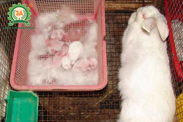 Kỹ thuật nuôi thỏ sinh sản: Chuồng thỏ sinh sản