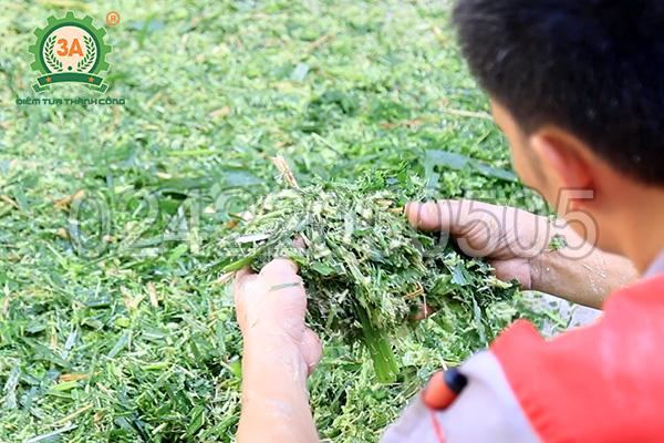Máy băm cỏ, nghiền ngũ cốc 3A4Kw - Sản phẩm cỏ sau khi băm