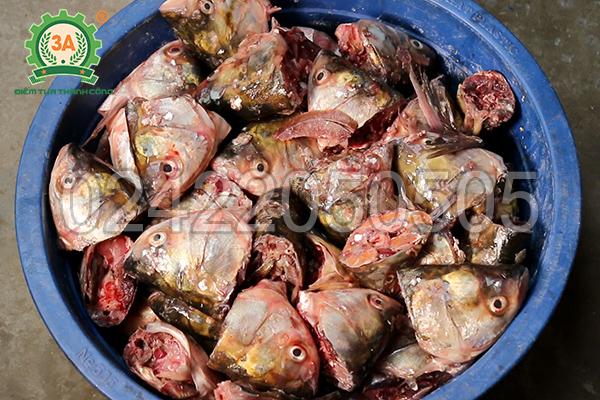 Đầu cá sau khi cắt bằng máy cắt đầu cá 3A1,3Kw