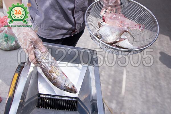 Sử dụng máy thái cá inox 3A2,2Kw