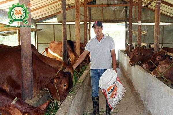 Cách nuôi bò nhanh lớn (02)
