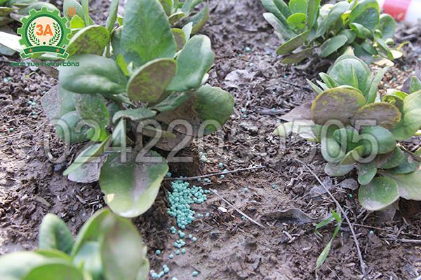 Dụng cụ bón phân 3A bón phân cho cây rất tiện lợi