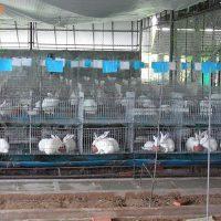 Kỹ thuật chăn nuôi thỏ thịt: Chuồng nuôi thỏ thịt