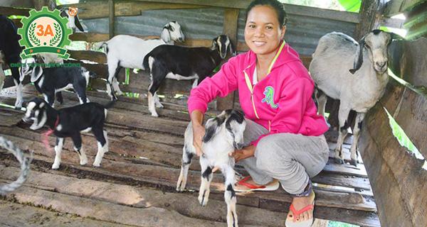 Kỹ thuật nuôi dê sinh sản: Chuồng nuôi dê