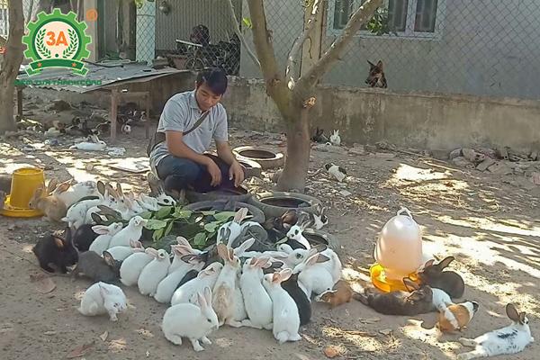 Chăn nuôi thỏ thả vườn