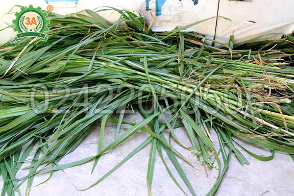 Nguyên liệu đầu vào của máy băm cỏ đa năng 3A6,5Hp