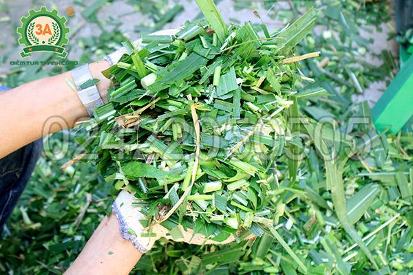 Sản phẩm sau khi băm của máy băm cỏ đa năng 3A6,5Hp