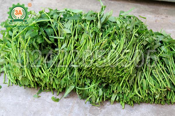 Nguyên liệu rau xanh của Máy băm nghiền đa năng 3A2,2Kw (Phễu vuông - Động cơ rời)