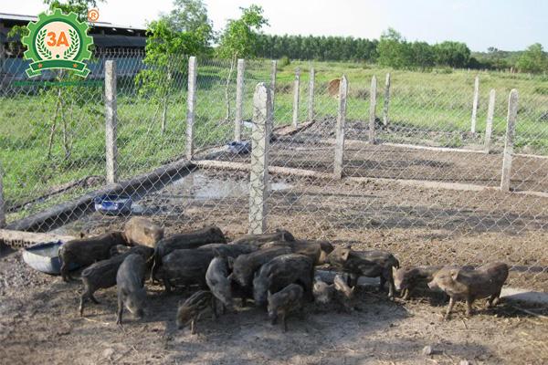 Chăn nuôi gì lợi nhuận cao (01)
