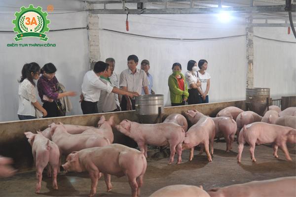 Chăn nuôi gì lợi nhuận cao (02)
