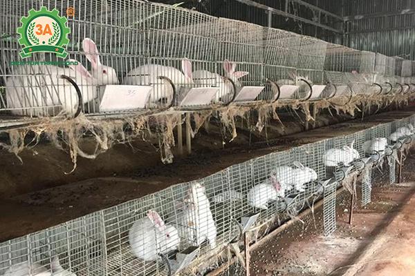 Chăn nuôi gì lợi nhuận cao (10)