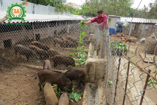 Chuồng trại chăn nuôi lợn rừng (01)