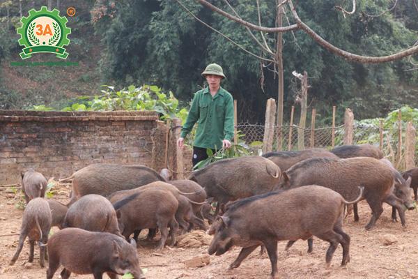 Chuồng trại chăn nuôi lợn rừng (04)
