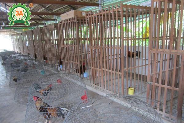 Làm chuồng nuôi gà tre (03)