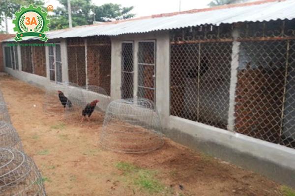 Làm chuồng nuôi gà tre (04)