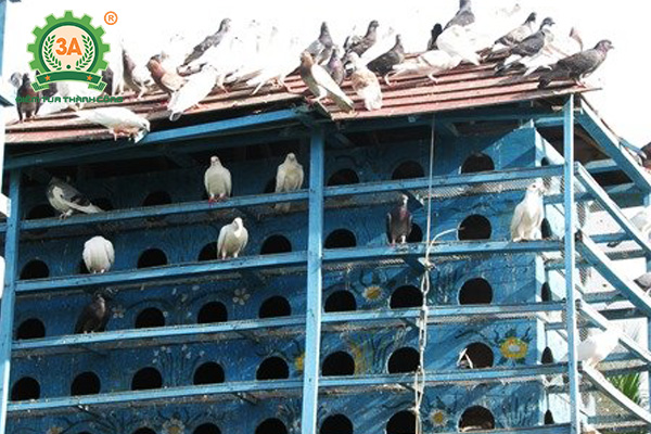 Chuồng chim bồ câu (02)