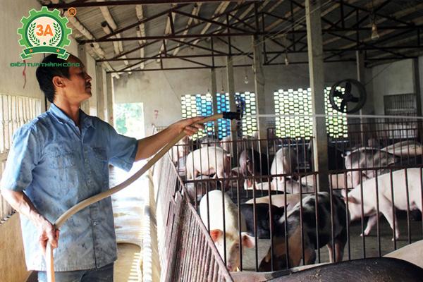 Nuôi lợn sạch bằng thảo dược tại Nam Định