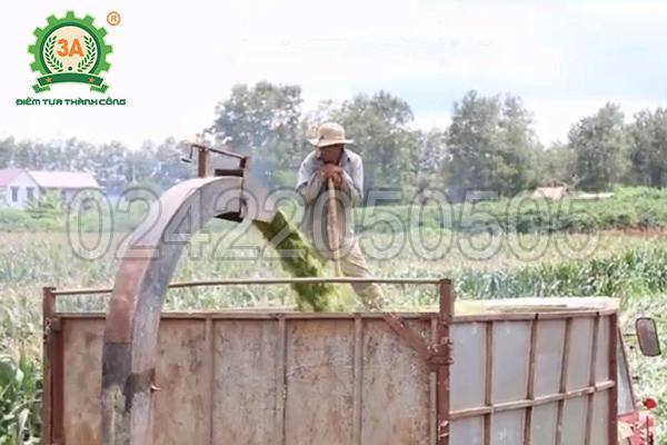Máy băm cây ngô, cỏ voi di động 3A60Hp (07)