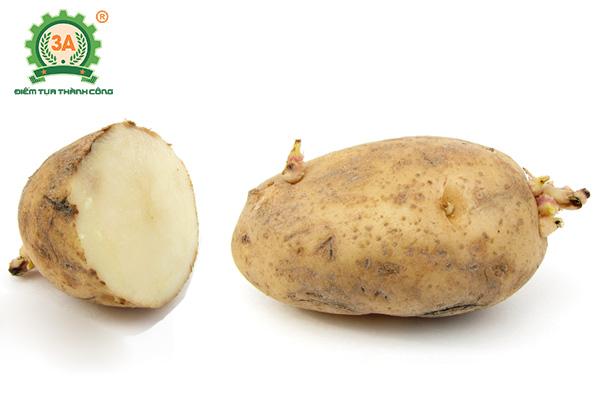 Kỹ thuật trồng khoai tây (04)