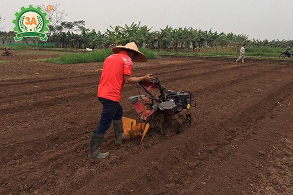 Kỹ thuật trồng lạc (03)