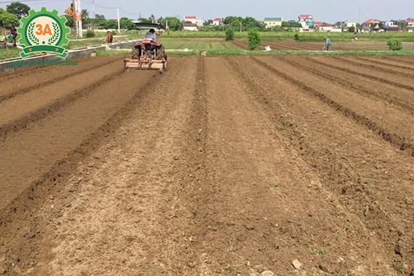 Kỹ thuật trồng lạc (04)