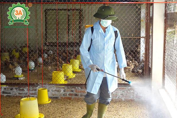 Kỹ thuật nuôi gà Lương Phượng Hoa sinh sản (12)