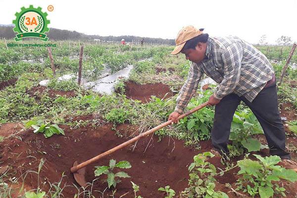 Kỹ thuật trồng cà phê (04)