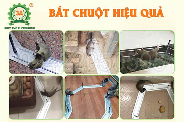 Máy bẫy chuột 3A (10)