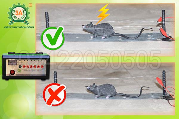 Máy bẫy chuột 3A (17)