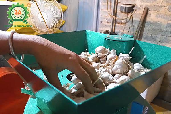 Nuôi gà bằng thảo dược (10)