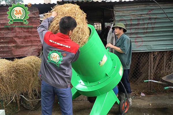 Mô hình nuôi bò sinh sản và bò giống ứng dụng dây chuyền chế biến thức ăn gia súc 3A (06)