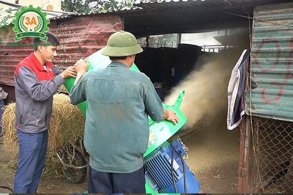 Mô hình nuôi bò sinh sản và bò giống ứng dụng dây chuyền chế biến thức ăn gia súc 3A (07)
