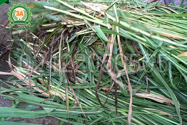 Máy băm cỏ, cây ngô 3A2,2kW có băng tải (04)