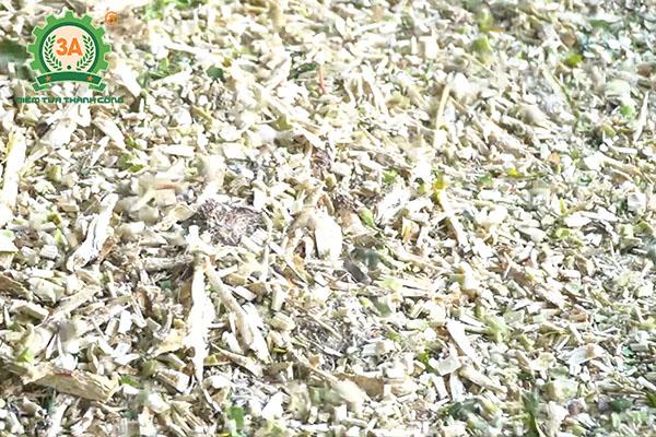 Ủ chua thân cây sắn làm thức ăn cho trâu bò (06)