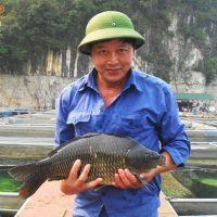 Nuôi cá chép giòn (01)