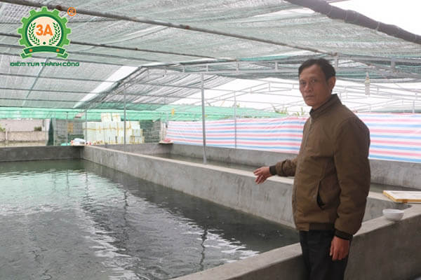Nuôi cá trong bể xi măng theo công nghệ mới (05)